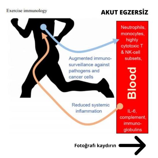 2 exercise immunology